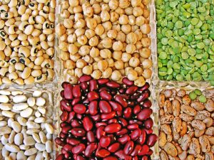 Protéines animales ou protéines végétales ?
