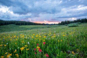 Biodiversité - prairie