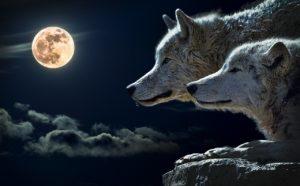 Sagesse amérindienne – Les deux loups