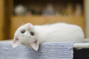 Une litière pour chat pas cher et compostable